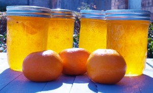 Dreamsicle Jam - Kellis Kitchen